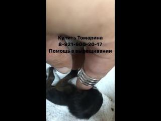 Наталья Бантеева. Зевс - маленький тамарин
