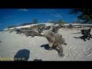 Игуаны на острове кайо ларго