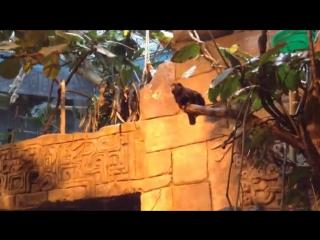 Тамарин. Самая маленькая обезьянка