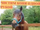 Чистим коня одной рукой \ Вызов-принят