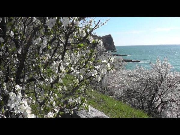 Пляж Гуровские камни.
