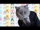 CRYPTO KITTIES: Коты о криптовалютах