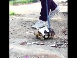 Черепашка на прогулке