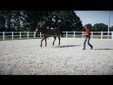 HIP - Arbeiten mit dem Horse Impulse Trainer