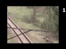 7 Животных-Мутантов в Чернобыле, Снятых На Камеру