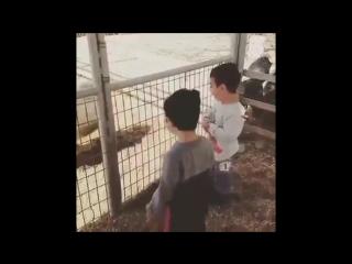 Малыши и козёл