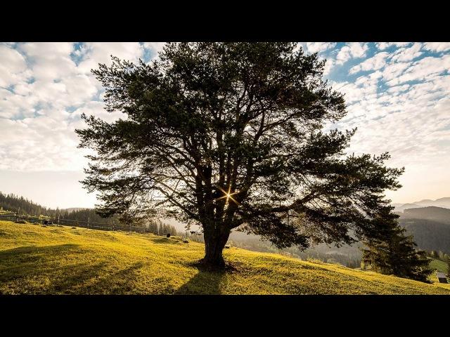 Cantata `Freue dich, erlöste Schar` BWV 30 - Johann Sebastian Bach