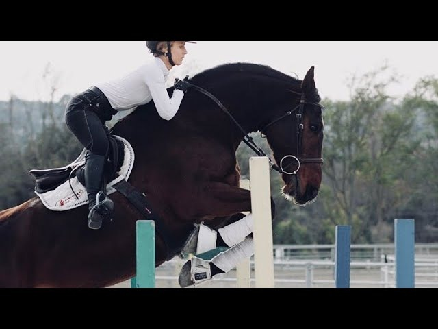 Body Gold || Equestrian Chill Music Video ||