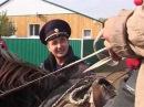 В Башкортостане активизировались конокрады