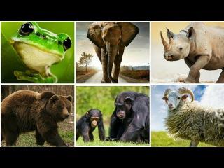 Животные для детей их голоса и название. Познавательное видео детям