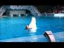 Белый кит Пончик звезда шоу