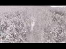 Танцующий лес. Рязанская область. Видео квадрокоптер. Вид сверху.