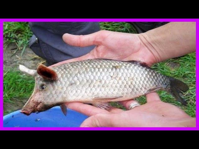 Подборка Угарные приколы на Рыбалке ⁄⁄ Jokes about fishing 2016
