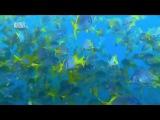 Чудеса голубой планеты - Южная Америка xeltcf ujke,jq gkfytns - .;yfz fvthbrf