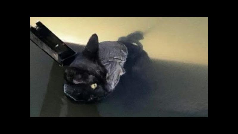 Девушка вытянула кота из реки и застыла в изумлении
