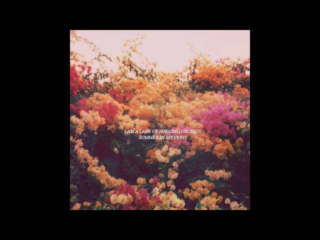 I Am a Lake of Burning Orchids – Summer in My Veins [FULL ALBUM | HQ SOUND]