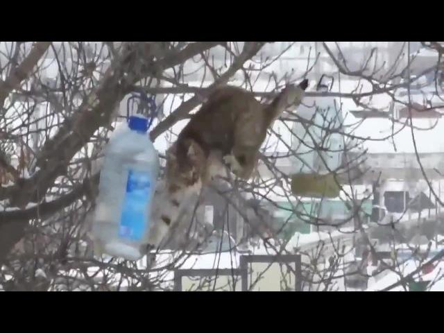 Кот-экстремал ворует сало из кормушки для синичек.