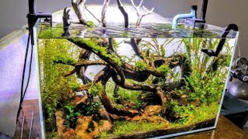 Eradicate Algae From Your NEW Aquascape | Aquascaping