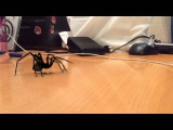Нападение паука на камеру
