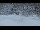 Заяц бежит по дороге