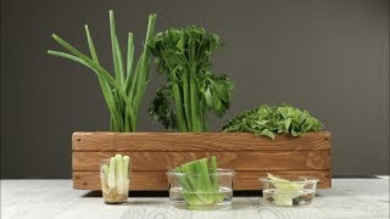 Как Вырастить Свежую Зелень Из Мусора: Простейший Мини-Огород На Кухне