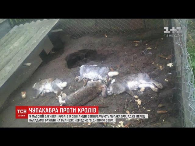 Повернення чупакабри: на Львівщині невідомий звір пошматував майже півсотні кролів