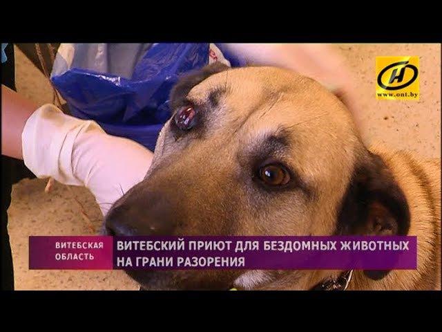 Витебский приют для бездомных животных на грани разорения