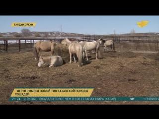 Талдыкорганский фермер вывел новый тип казахской породы лошадей