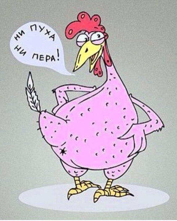 Добрым вечером, прикольные открытки курица