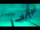 Подготовка боевых пловцов в РВВДКУ