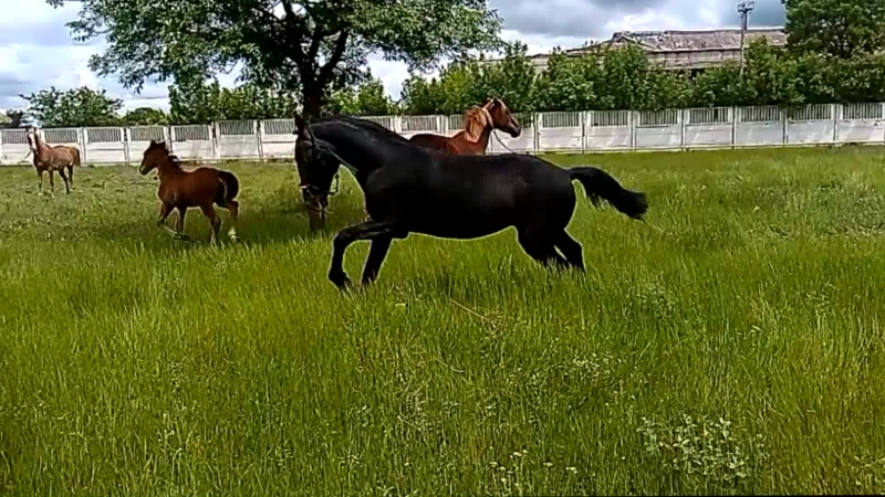Самое первое знакомство Рамоны с новыми друзьями) |22.05.2017