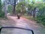 Run, Run Wild Elephant