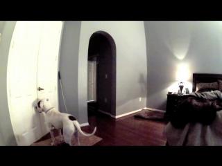 Хозяйка решила оставить пса самого дома. Но когда она посмотрела запись скрытой камеры…