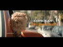 Cat Toyota Corolla Feels good inside