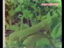 Karpuzcu Behçet 1979 Yeşilçam Erotik Film izle