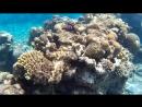 подводный мир Красного моря в Эйлате