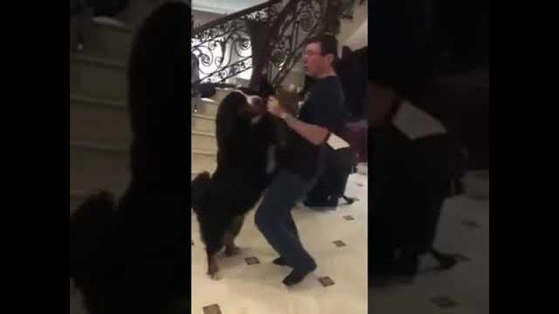 Плокулол Уклаины Юлка Луценко танцует с собакой по кличке Черчилль