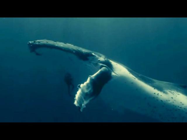 Поль Мориа -Душа на двоих клип (Океаны)