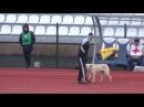 Собака на беговой дорожке ФК Тюмень Сибирь
