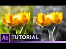 Isolate Leave Color Effect After Effects Tutorial