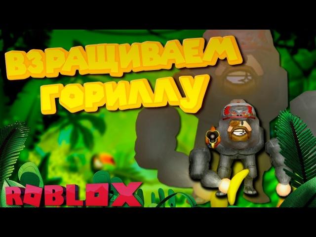 Роблокс СИМУЛЯТОР ВЗРАЩИВАНИЯ ГОРИЛЛЫ ROBLOX Gorilla Simulator 2