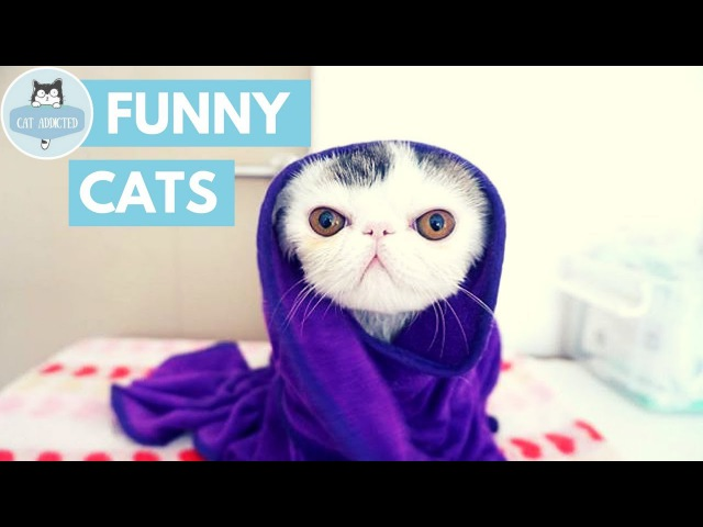 Cats Are Simply The Funniest