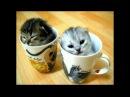 Забавные и милые котята и кошки - Самое тёплое и пушистое видео