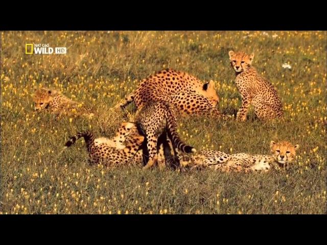 National Geographic В великом краю Серенгети The Great Serengeti 2011
