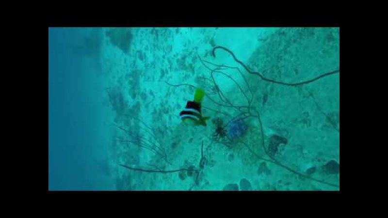 Рыбы-клоуны андаманского моря, Симиланские острова 2017