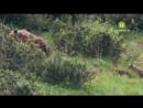 Дикая природа. Хранители. Мир животных Словакии. Документальный фильм