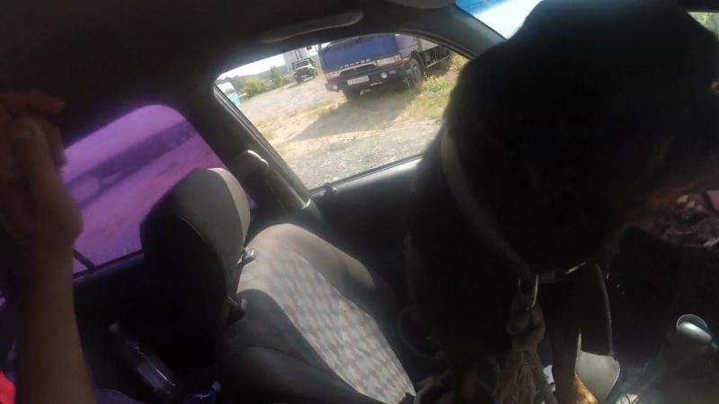 Видеоинструкция -Собака Авто Велосипед в городе