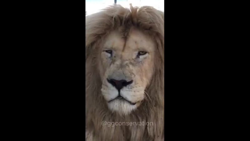 Animal maravilhoso