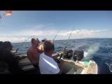 Океанская рыбалка с яхты. Троллинг на тунца