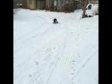 Любимое развлечение зимой